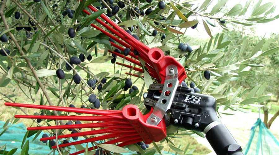 scuotitore olive migliore